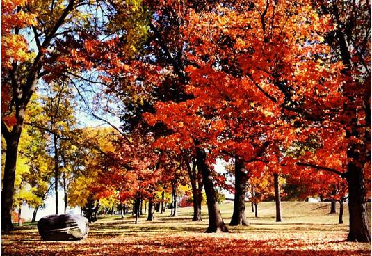 Photo: Fall foliage