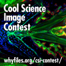 2013-Cool-Science-copy