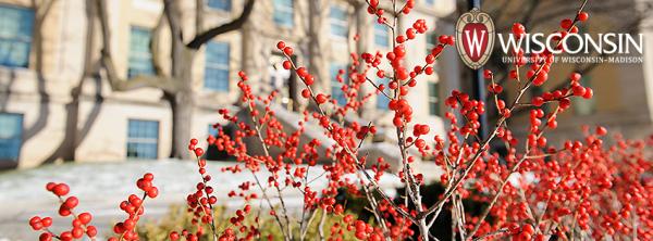 Red berries by Nicholas Hall in winter