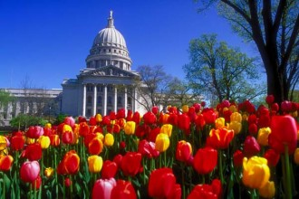 Wisconsin State Capitol Building with tulips during spring. © UW-Madison News & Public Affairs  608/262-0067 Photo by:  Jeff Miller Date: 1994     File#: color slide